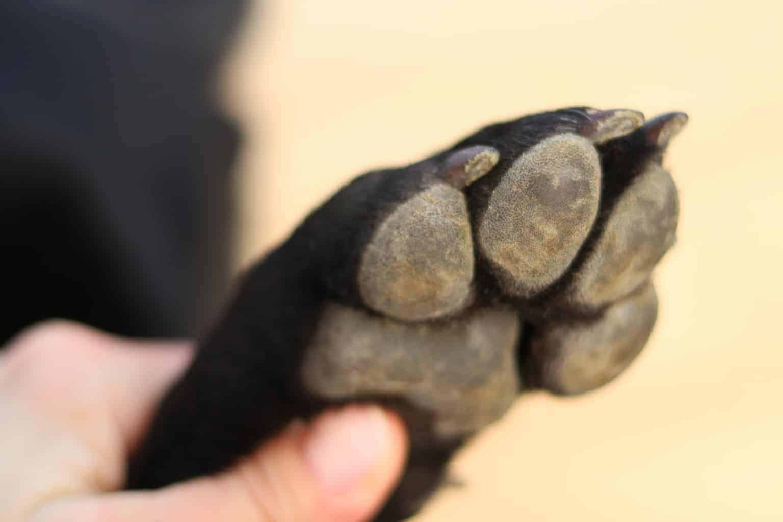 A person holding a puppies paw.
